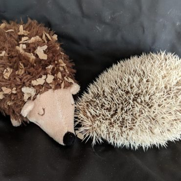 Diaries of a Hedgehog – Going Alone